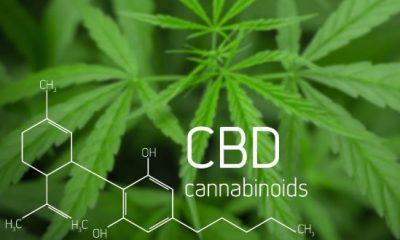 CBD Business Opportunities That Can Help You Prosper in 2021