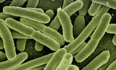 Are There Different Types of Bacteria