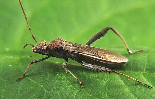 Choosing The Best Pest Control Queensland