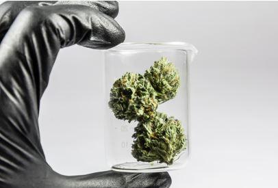 Michigan's Weed