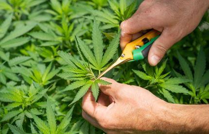 Monitor your plant's progress
