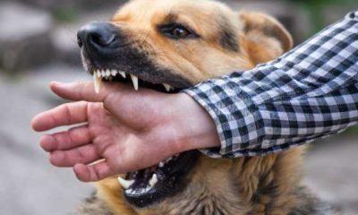 The Top 8 Most Violent Dog Breeds