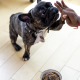 Buying the Best Quality Pet Food In Australia