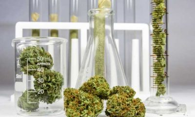 A Quick Guide to Opening a Dispensary